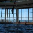 イルカのショー(1)
