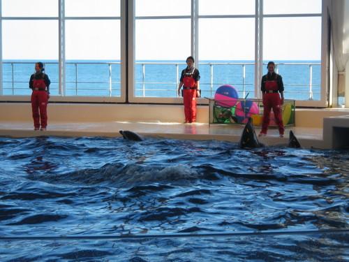 イルカのショー(3)