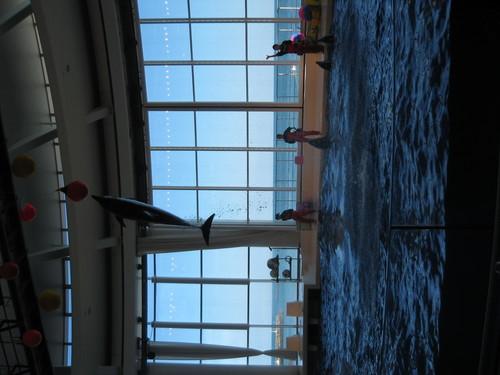 イルカのショー(2)