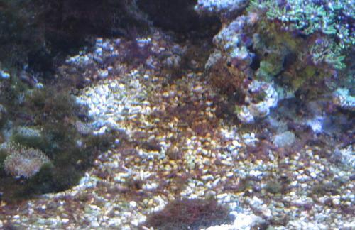 赤い藻です。(2)